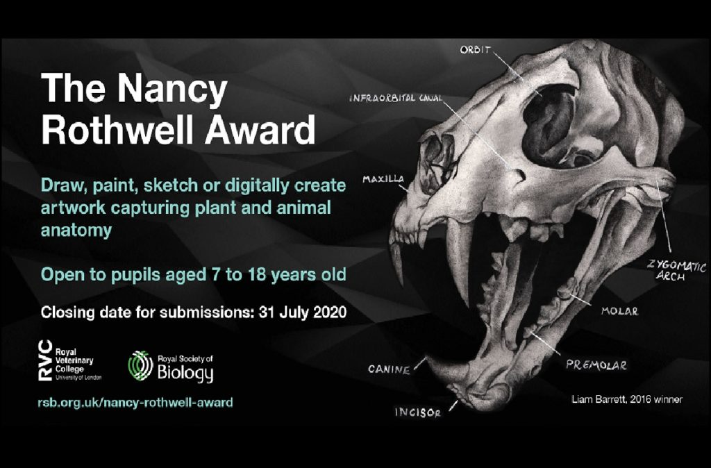 Royal Society of Biology The Nancy Rothwell Award 2020 social media card featuring example anatomical drawing by Liam Barrett, 2016 winner